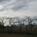 Kirsid peale lõikust