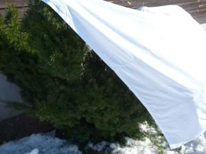 jugapuu on kaetud voodilinaga