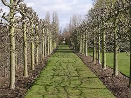 spaleerpuu allee