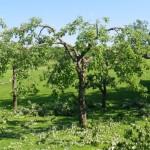 vanast puust saab alati asja