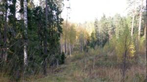 maaliline mets