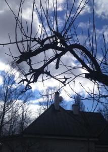 vead õunapuu lõikamisel